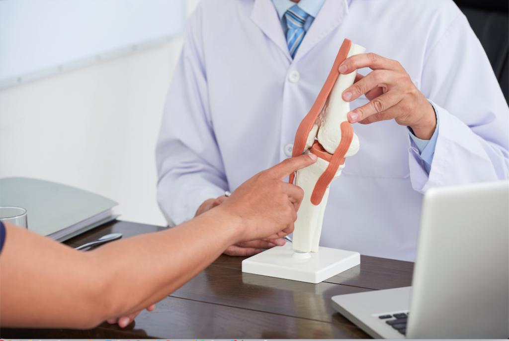 articolazione del ginocchio modello anatomico